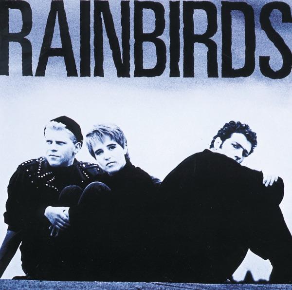 Rainbirds mit Blueprint