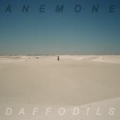 Anemone - Daffodils
