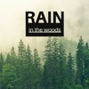 Rain in the Woods Soft Raindrop Quiet Distant Thunder for Deep Relaxation