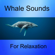 Whale Sounds for Relaxation - Whale Sounds Relaxation