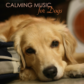 Music for Dog Anxiety - Ocean Waves