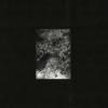 Zaman, Zaman - The Trees & The Wild