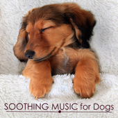 Soothing Music For Dogs  Calming And Relaxing Music For Putting A Dog To Sleep, Pet Therapy-Pet Care Music Therapy