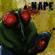 Dino - Nape