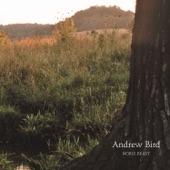 Andrew Bird - Tenuousness