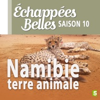 Télécharger Namibie, terre animale Episode 1