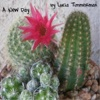 A New Day - Single - Lucia Timmerman