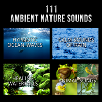 111 Ambient Nature Sounds: Best Relaxing Music, Hypnotic Ocean Waves, Calm Sounds of Rain, White Noise, Healing Waterfalls and Animal Songs to Reduce Stress, Various Artists