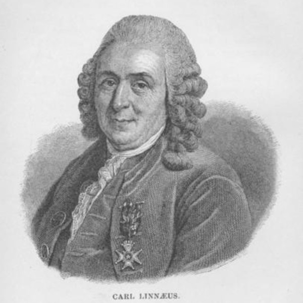 Podding Linnaeus