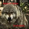 I m an Animal feat Hopsin Single