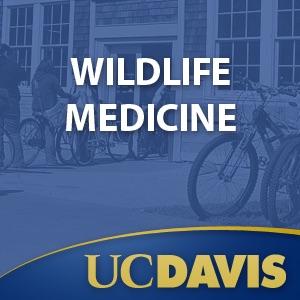 Wildlife Medicine