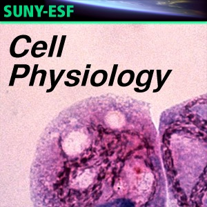 Cell Physiology - Podcasts of Student Papers - Audio - Readings of Student Papers