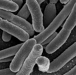 Microbes, the little guys.