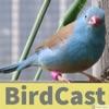 BirdCast artwork