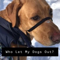 Who Let My Dogs Out? podcast