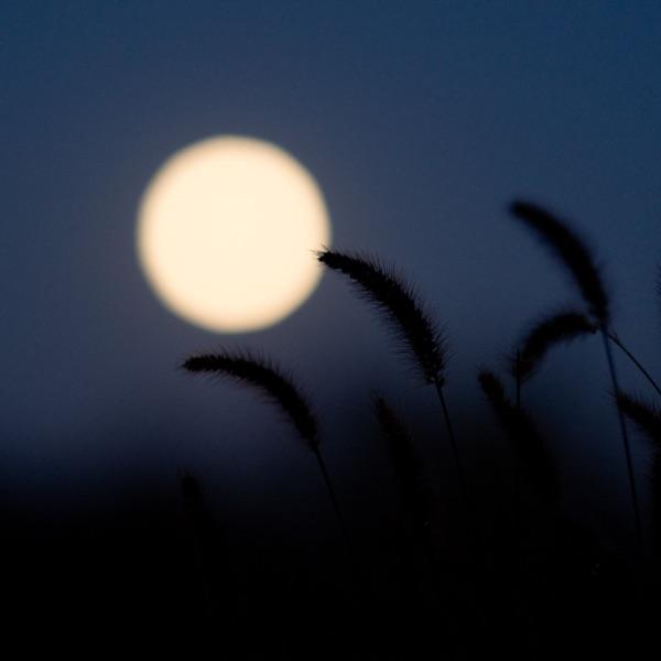午夜读诗   给自己一首诗的时间