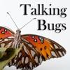 Talking Bugs artwork
