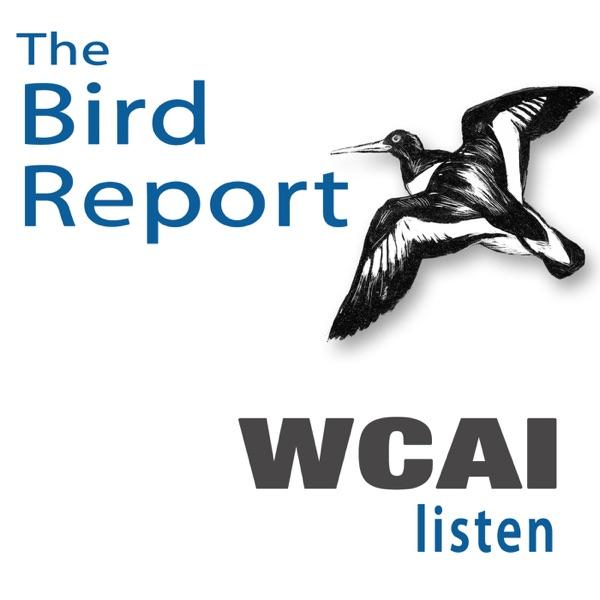Weekly Bird Report on WCAI