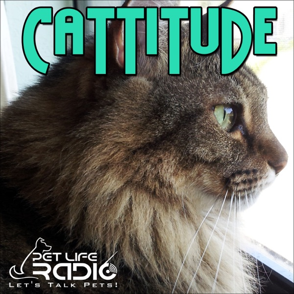 Cattitude - Cat podcast about cats as pets on Pet Life Radio
