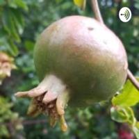 Fruit Uncensored podcast