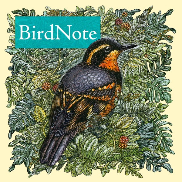 BirdNote banner backdrop