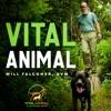 Vital Animal Podcast artwork