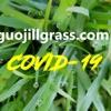 Severe COVID-19 Recovery Sharing—guojillgrass.com artwork
