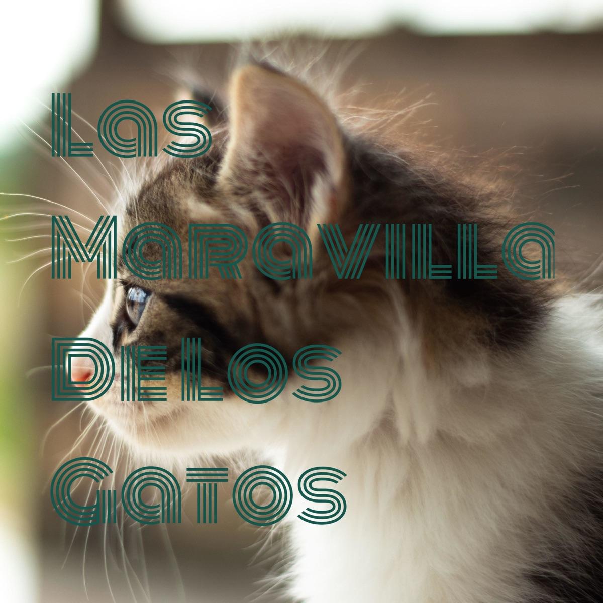 Las Maravillas De Los Gatos