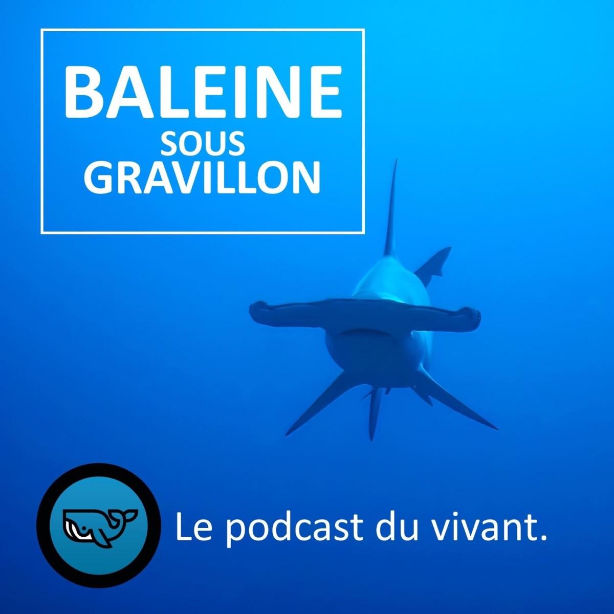 Baleine sous Gravillon (BSG)