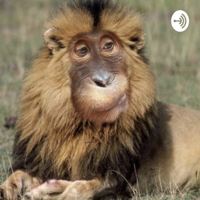 Liberty Lions podcast