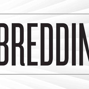 Breddin