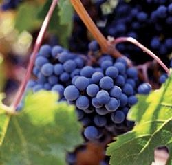 Cellar Dwellers - Home Winemaking