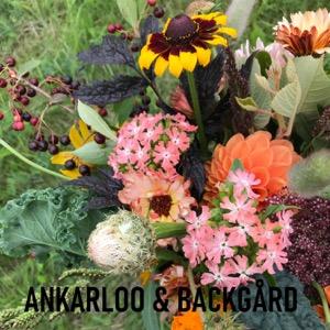 Ankarloo & Backgård