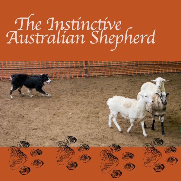 The Instinctive Australian Shepherd