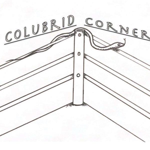 Colubrid Corner