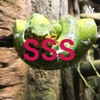SSS artwork