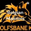 Belgian Malinois artwork