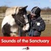 Sounds of the Sanctuary artwork