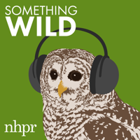 Something Wild podcast