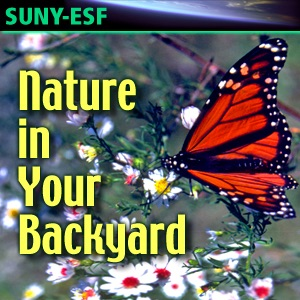 Nature in Your Backyard - Videos