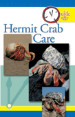Quick & Easy Hermit Crab Care