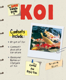 Super Simple Guide to Koi