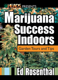 Marijuana Success Indoors