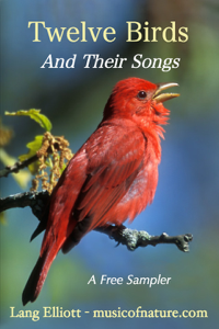 Twelve Birds and Their Songs Book Review