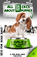 All About Cavalier King Charles Puppies