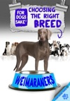 Choosing The Right Breed Weimaraners