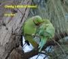Cheekys Birds Of Hawaii