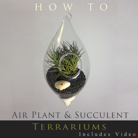 How to … Air Plant and Succulent Terrariums