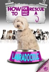 How To Rescue A Labradoodle