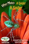 What Makes A Spider A Spider